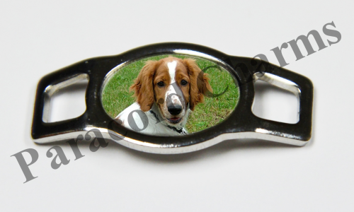 Welsh Springer Spaniel - Design #006