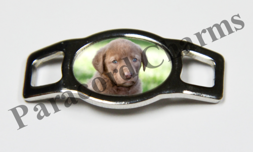 Chesapeake Bay Retriever - Design #006
